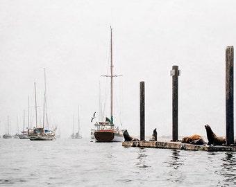 "Nautical Ocean Landscape, Harbor Photograph, Sailboats, Marina, Seals, Pier, Morro Bay California, Gray Wall Art ""Morro Bay Harbor"""