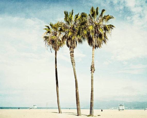 California Palm Trees Venice Beach Photograph Los Angeles