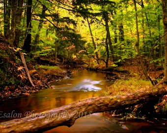 The forest  color print mounted on Single Weight Matboard