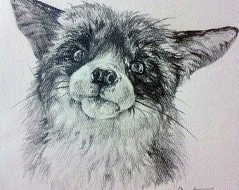 Curious Fox - Original Graphite Drawing - 8x8