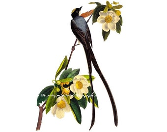 "FORK TAILED FLYCATCHER  handmade wood wooden jigsaw puzzles.7.5"" x 12""  about 50 pieces"