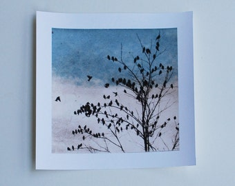 bird art, Archival reproduction, Doves Dipy, 88 editions art