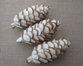 Sola Pinecones - As seen in Vogue - set of three