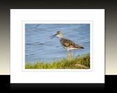 Sandpiper Matted Print, Avian theme decor, Shorebird wall art, Stone Harbor Wetlands Birds, Ready for framing or framed