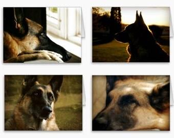 German Shepherd Stationery,German Shepherd Photography Note Cards,Gorgeous German Shepherd Cards,German Shepherd in Summer,Dog Photography