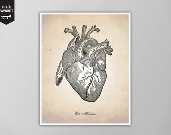 Human Heart, Human Anatomy Heart Art Print, Human Anatomy Drawing, Human Anatomy Poster, Human Heart Illustration, Heart Poster, Heart Print