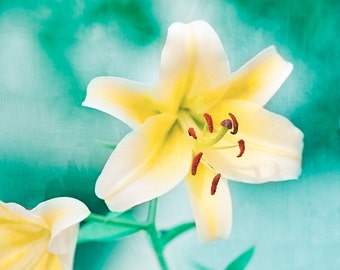 "Turquoise Yellow Photography, Teal Mint Flower Art Print, Yellow White Aqua Lily Picture, Turquoise Floral Teal Wall Decor, ""Yellow Lily"""