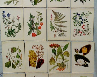 Set of 32, Botanica for young, Vintage Russian Postcards, plants, grass, flora, print 1980