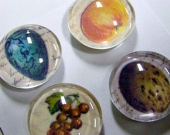 glass magnets - set of 4 - vintage still life