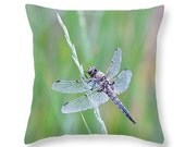Dragonfly Pillow Cover, Nature Photography, Dragonfly Home Decor