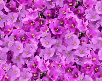 Wilmington Prints - Shades of Violet - Packed Violets - Magenta