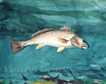 Winslow Homer Watercolor Reproductions. Channel Bass, 1904. Fine Art Print.
