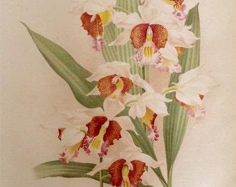 RARE Antique Botanical 1880s Print  Lithograph Flower Floral 1884 Horticulture Gardening Home Decor Floristry Severeyns Goffart