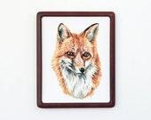 Red Fox 8x10 Art Print - Fox Portrait Giclée Print