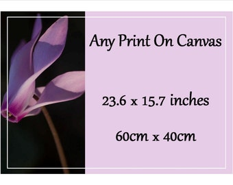 Canvas Picture - 60cm X 40cm  / approx. 23.6 inches X 15.7 inches