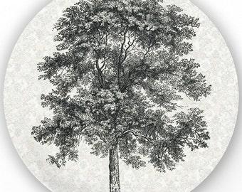 Tree II - vintage engraving melamine plate