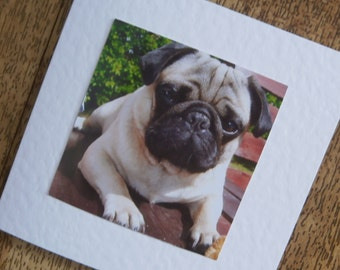 Small Pug card for any occasion