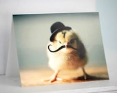 Chick in Black Derby Hat With Mustache Chicken Photo Card Baby Animal Photography Bird in A Hat