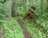 Eagles Rest Trail, hiking trail, wooded path, forest trail, wooded trail, hiking trail decor, fine art photo graph, digital download,