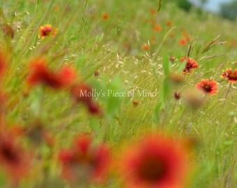 Wildflower Orange