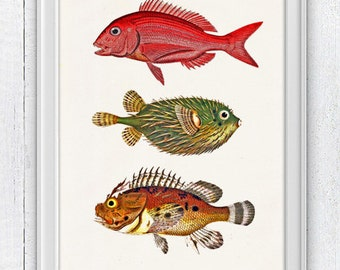 Blowfish  print - Vintage  fishes collection 05- Sea fish collage- sea life print-multicolor fishes SAS013