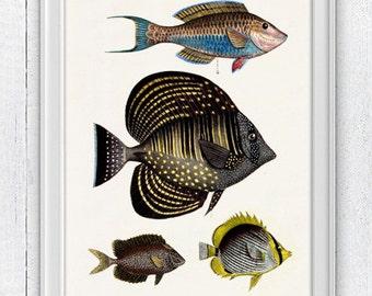 Naif  fishes - Wall decor poster ,  Sea fish collage- sea life print-Marine  sea life illustration A4 print SPA039