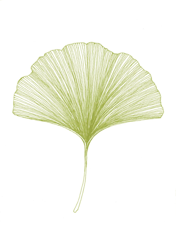 Ginkgo Leaf Print Of Original Black Or Green Pen By