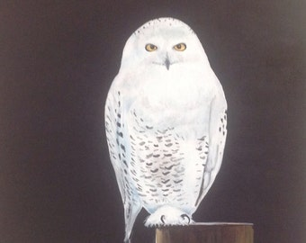 Snowy owl painting – Etsy
