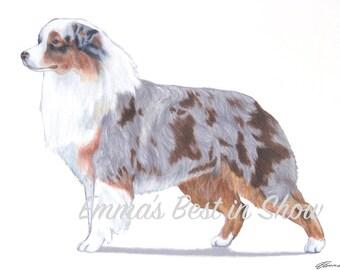 Australian Shepherd Aussie Dog - Archival Original Fine Art Print - AKC Best in Show Champion - Breed Standard - Herding Group