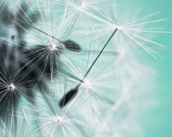 Dandelion flying seed with teal backround