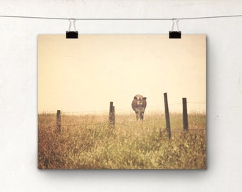 Cow Photograph, Country Western Art, 8x10 Print, Farm Animal, Warm