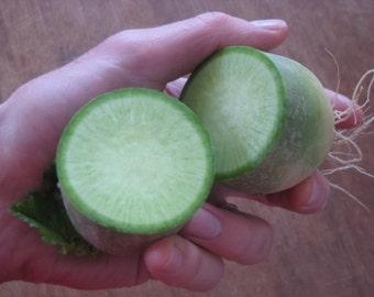 """RADISH """"Green Meat Radish""""  -  heirloom vegetable seeds"""