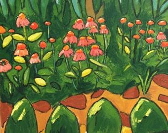Garden Echinacea