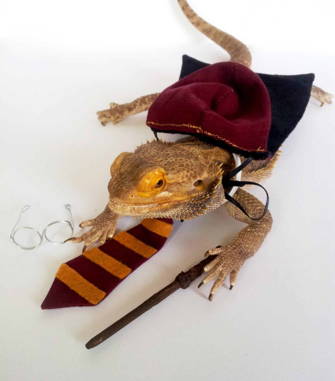 Lizard clothing store