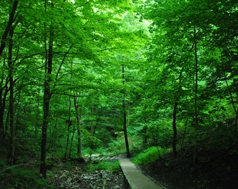 """Original Photo """"Serene"""", walking in the forest, beautiful shades of green, gift for nature lovers, sizes 8x10, 11x14, 16x20, 20x30 inches"""