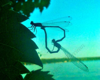 Dragonfly love 5 x 7 matted photo OR 12 note cards