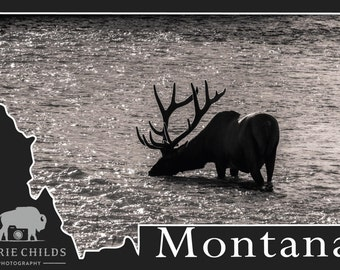 Montana Greeting Card- Elk in Velvet
