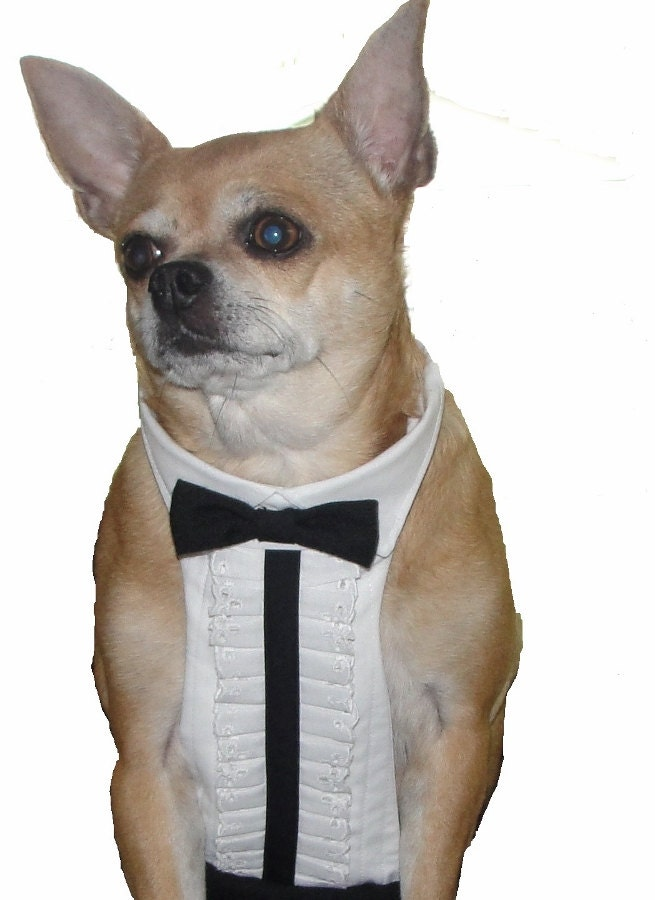 Dog tuxedo chihuahua clothes dog wedding by chiccaninecouture - Dog clothes for chihuahuas ...