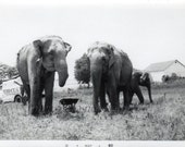 Snack Time!  Vintage Circus Snapshot Photo Americana