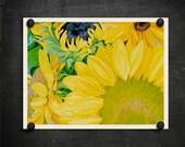 Sun Flower Art Print. Modern Yellow Decor. Folk Art sunflowers. Green brown blue. Happy art. Sherri Nelson. In Joy