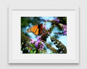 Butterfly Photography | Nature Posters | Gift Under 30 | Beautiful Photography