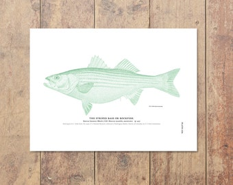 Striped Bass Striper Art in Green-Fishing Poster Bass Print Beach Decor Nautical Decor Wall Art Gift For Dad Fishing Print Father's Day