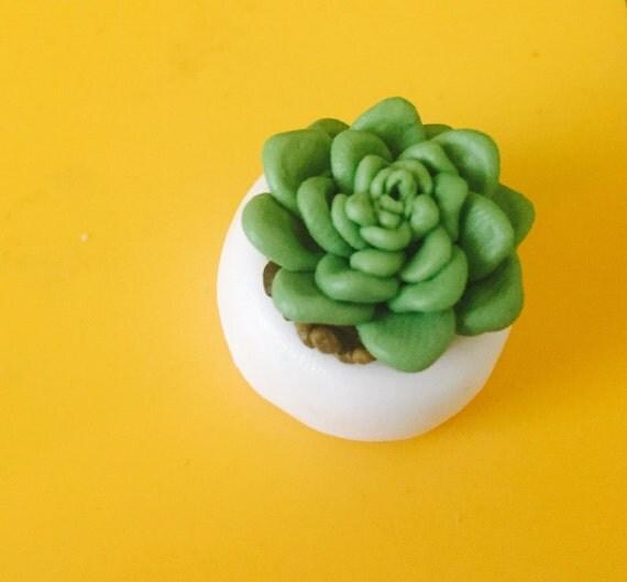 miniature fleurs mini echeveria en pot de fleur en terre. Black Bedroom Furniture Sets. Home Design Ideas