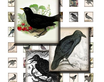 Crow Blackbird Raven Black Bird Digital Images Collage 8.5x11 4x6 In Sheet Scrabble Tile 19x21mm .83x.75 inch Squares INSTANT Download ST06