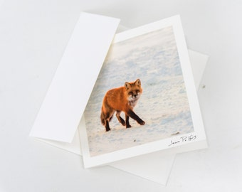 Red fox greeting card, wildlife photography, card for multiple occasions, fine art photography, nature photography, nature note card, fox