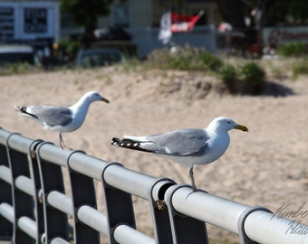 Photography, Beach, Seagulls on Pier
