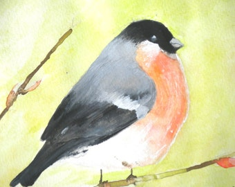 Fantastic Bullfinch, Original Watercolor Painting