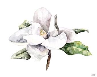 "Magnolia Painting - Print from Original Watercolor Painting, ""Magnolia 4"", White Magnolia, Botanical, Flower Print"
