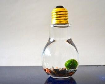 Marimo Moss Ball Light Bulb Aquariums - Japanese Nano Moss Balls in Lightbulb Glass Vase Terrariums - Colorado Pebble