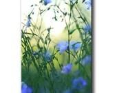 flower prints, blue wall art, wildflower decor, blue art photo, botanic canvas,